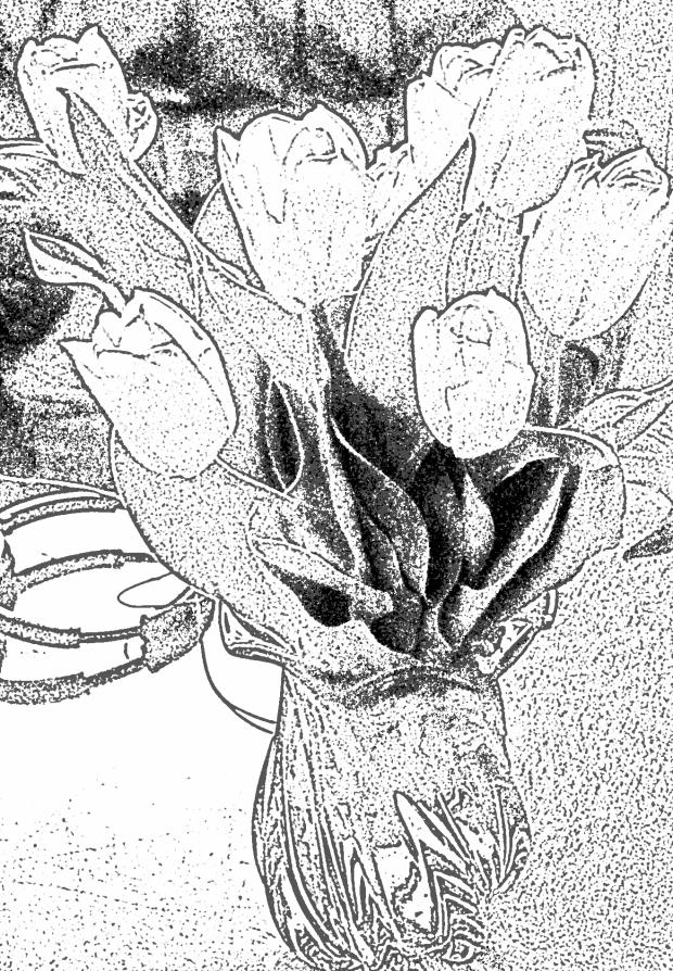 Level 3 Tulips
